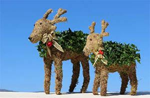 392G, Mossed Ivy Reindeer Large Fresh Topiary